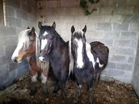 3 beautiful mares