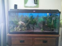 180 litre aquarium and all accessories (no stand)
