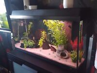 110 liter fish tank with 5 fish and loads of accessories