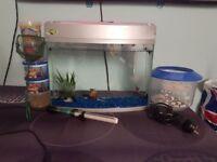 Aquarium Setup Includes - 7 Fishes, 2 pumps,Food,Heater and other bits)