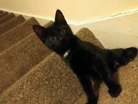 Lovely kitten looking for new home