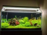 Full optiwhite fish tank 202l