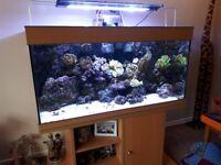 Marine aquarium 4' complete set up