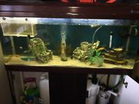 4ft 200L Fish tank and stand