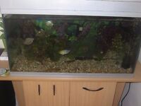 LARGE 120LITRE FISH TANK WITH FISHES