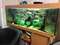 Very large fish tank