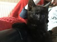 Kittens for sale to a good loving home !