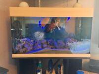Juwel 180 Aquarium