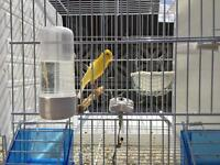 Two breeding cages
