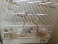 2 finches with cage
