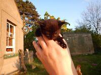 Sweet Black kitten