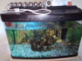 Fish and tank for sale comes with extras