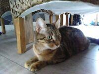 Kitten male/female