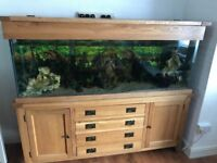 Fish tank for sale 400 no less,the height is 27ichs,15 and half wide. You put fresh water init