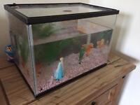 Fish Tank (with extras)