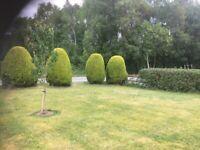 Gardening/house maintanence