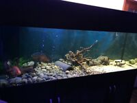 Fish tank 640l 6ft long 2ft wide just over 2ft tall with everything stands about 6ft