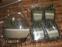 SMALL PLANT ORNAMENTS (LISTED TIL SOLD)