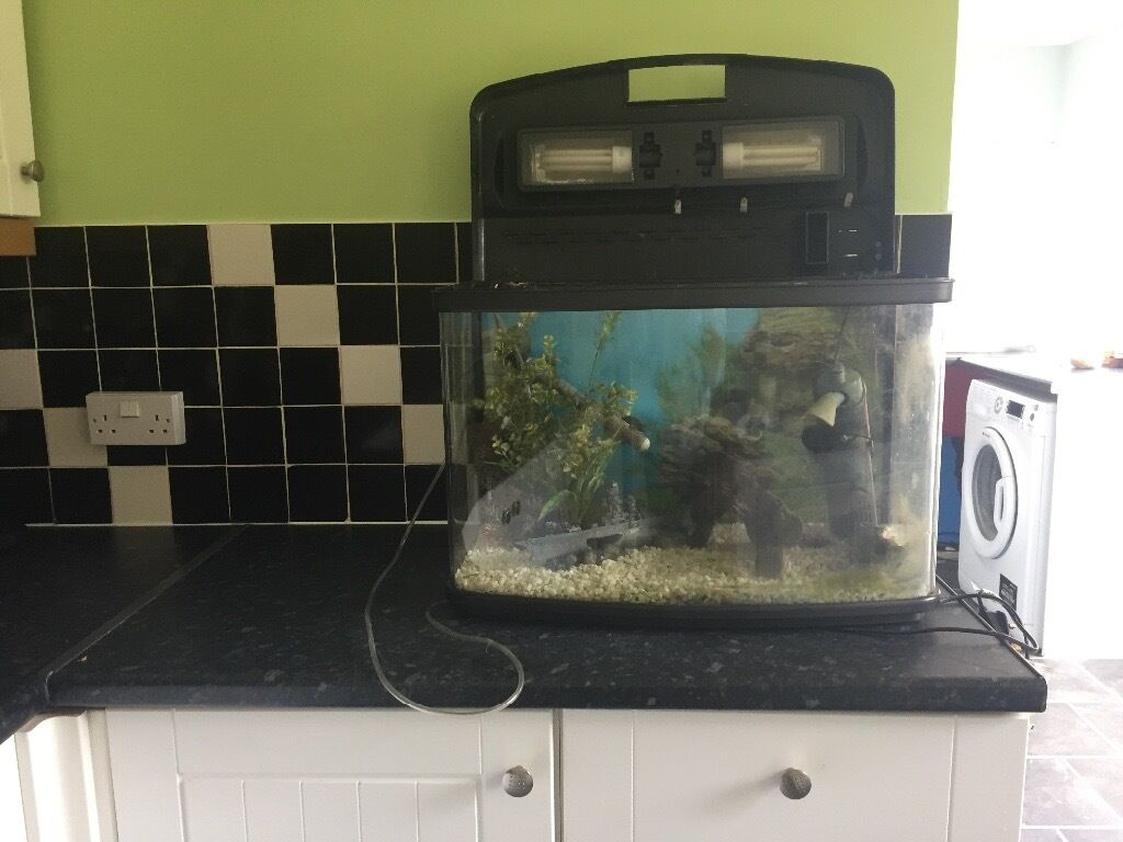 Fish tank in york - Tropical Fish Tank