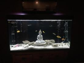 Rena 75 gallon fish tank. No stand.