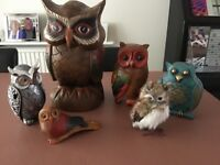 Collection of rare and cute Owls