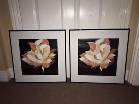 Pair of Flower Pictures - FREE
