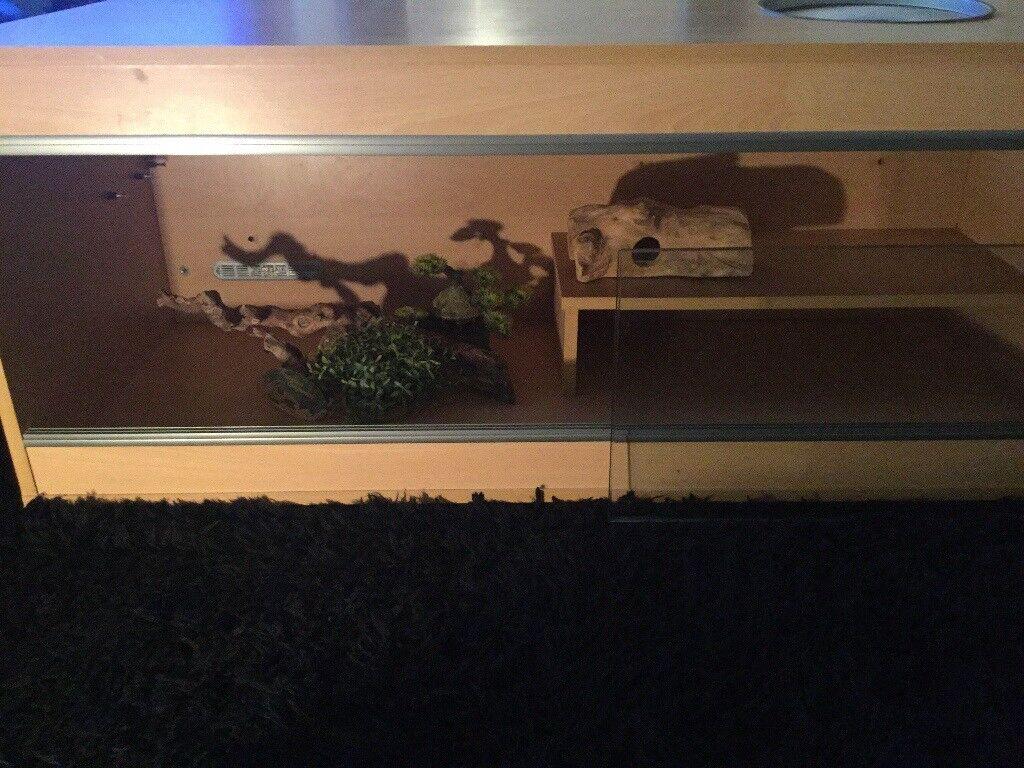 4ft Reptile Vivarium & extras