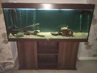 Jewel Rio 400 ltr fish tank