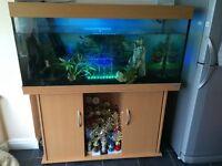 Jewel 350 aquarium, full tropical set up