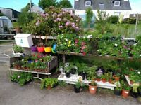 Summer bedding plants,shrubs and trees