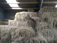 Hay - small bale meadow