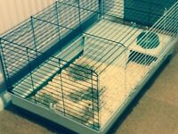 Lovely Guinea Pig Lilly seeks home