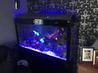 5ft marine tank with sump