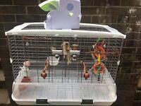 Vision xl bird cage