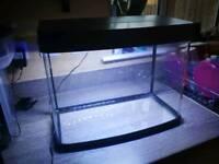 50 litre fish tank aquarium