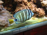 Marine aquariium contents