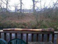 Eucalyptus Didgeridoo