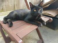 young adorable male cat looking for lovely family