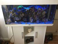 Stunning marine aquarium the full set up bargain £295