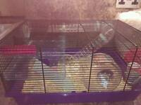Two Dwarf hamsters with cage food and bedding