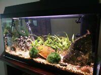 Jewel Aquarium Korallux 60 litre tropical fish tank - live plants, fish and accessories included