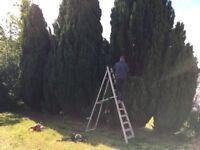 Cuttingedge treecare & landscaping autum discount