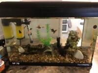 Vf 70 aquamanta fish tank 70 litres with fish