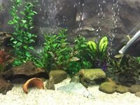 Tropical Community Fish