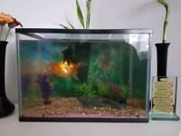 Small fishtank for sale