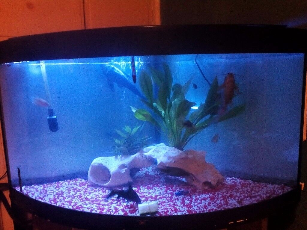 Corner fish tank with everything