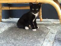 Gorgeous little kitten needs a new home