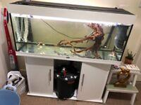 Bargain! JUWEL 240L fish tank / aquarium gloss white inc stand! Not fluval