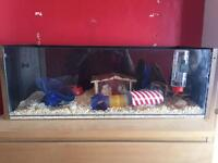 Hamster including large home