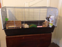 Two Young Felmale Guinea Pigs with Cage and Accessories